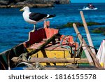 Seagulls On Boats Anchored On...