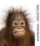 Close Up Of A Young Bornean...