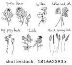 set of decorative line art... | Shutterstock . vector #1816623935