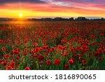 Beautiful Poppy Field During...