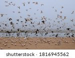 Great Colony Of Seabirds On Th...