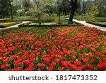 Garden Design And Landscaping....