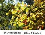 Bright Autumn Foliage On The...