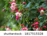 A Selective Focus On Fuchsia...