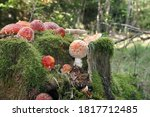Many Toadstools On A Tree Trunk ...