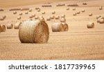 Freshly Cut Hay Rolls In Field...