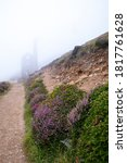 Foggy Footpath With Gorse And...