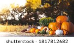 Fall Scene With Pumpkins Gourd...