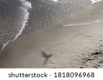 Sea Coast  Sand Water And Gull...
