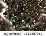 it is beautiful pink summer... | Shutterstock . vector #1818387062