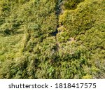 Aerial Drone View. Tall Green...