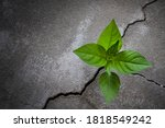 Young Tree Plant Growing...