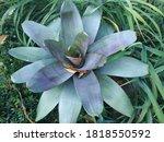 Ornamental Plants With Purplis...