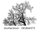 black alder tree top branches... | Shutterstock .eps vector #181866572