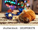 Ginger Cat Playing With Garland ...