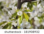 spring | Shutterstock . vector #181908932