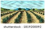 agave field. vintage retro... | Shutterstock .eps vector #1819200092