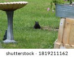 A Black Squirrel Sitting On...