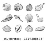 A Set Of Empty Seashells. The...