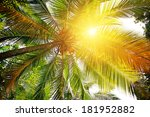 Sunlight Through The Leaves Of...