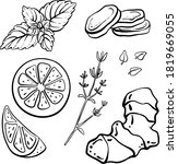 ginger  lemon  mint  thyme.... | Shutterstock .eps vector #1819669055