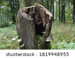 A Large Hollow With Soil And...
