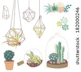 Vector set with succulents, flowers and glass terrariums
