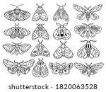 Set Of Stylized Celestial Moth. ...
