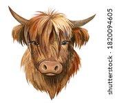 Bull On Isolated White...
