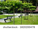 Plane Trees In The Shape Of...