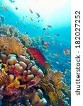 Coral Reef With Red Exotic Fis...