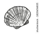 saltwater scallop seashell ... | Shutterstock .eps vector #1820656835