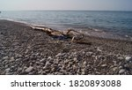 Rubber Slippers And Driftwood...
