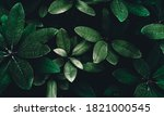 Exotic Leaves Of Bush Plant As...