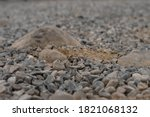 Texture Of Gray Stones. Crushed ...