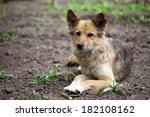 a stray dog lies | Shutterstock . vector #182108162