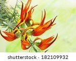 Exotic Fiery Orange Flower On ...