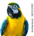 parrot playful isolated on... | Shutterstock . vector #182121302
