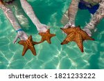 Close Up View Of Starfishes In...