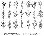 collection forest fern...   Shutterstock .eps vector #1821303278