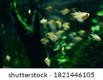 Small Decorative Fish In An...