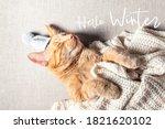 Hello Winter Text. Cute Little...