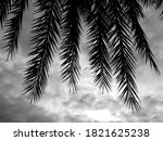 Beautiful Palm Leaf Of Silver...