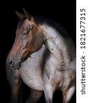 Minimalist Equine Portrait On...