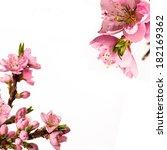 peach flowers frame    Shutterstock . vector #182169362