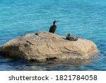 Cormorants On Rocks Surrounded...