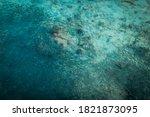 Black Tip Reef Shark Hunting A...