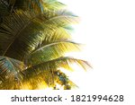 Tropical Palm Tree Leaves And...
