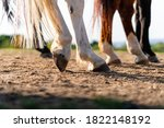 Close Up Of A Horse\'s Hind Leg...