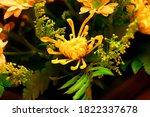 A Yellow Color Chrysanthemum...